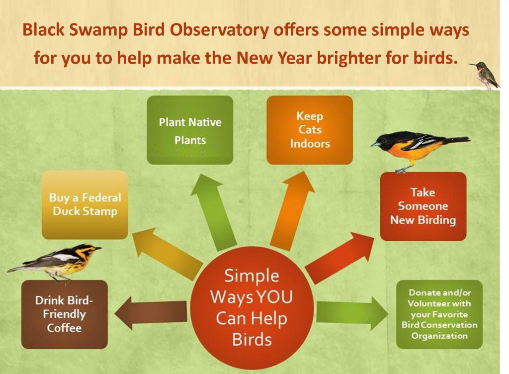 Simple Ways YOU Can Help Birds